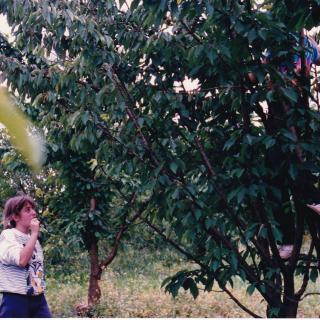 Dad took this memorable picture of me eating cherries and my husband Jim in the tree picking them for me.