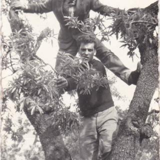 My beautiful Dad and his best friend Luigi getting up to mischief in the olive trees of Bitritto, Bari.