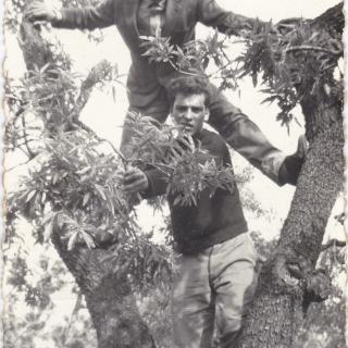 My Dad and his best friend Luigi climbing the olive trees in their home town of Bitritto.